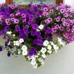 Ein Herz für unsere Gäste Blumen von der Gärtnerei Kurz