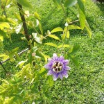 Endlich eine Blüte